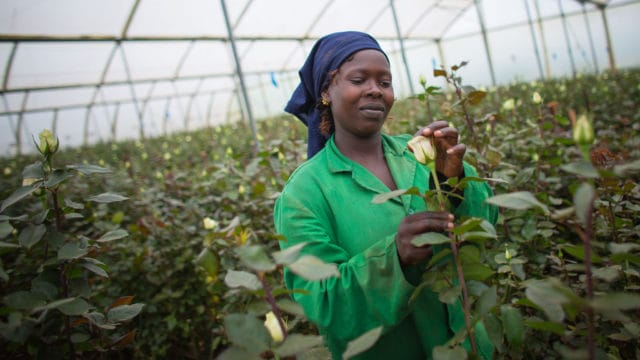 Kenyan company producing natural solutions for pest control